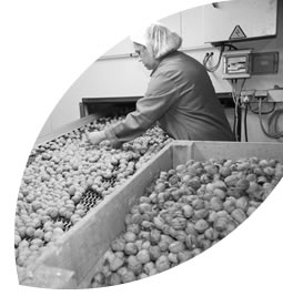 The selection of the nuts takes place in accordance to numerous criteria, which are : production site, the variety, the size, the colour, the quality of the kernels, the taste…